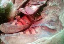 """Archaeologists Discover 1,500 Year Old Mongolian Mummy """"Wearing Adidas Boots"""""""