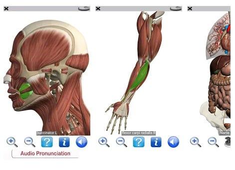 Visual Anatomy Free