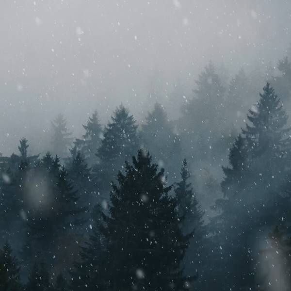 Animated Forest Snow